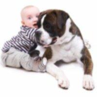 Знакомить собаку с малышом?