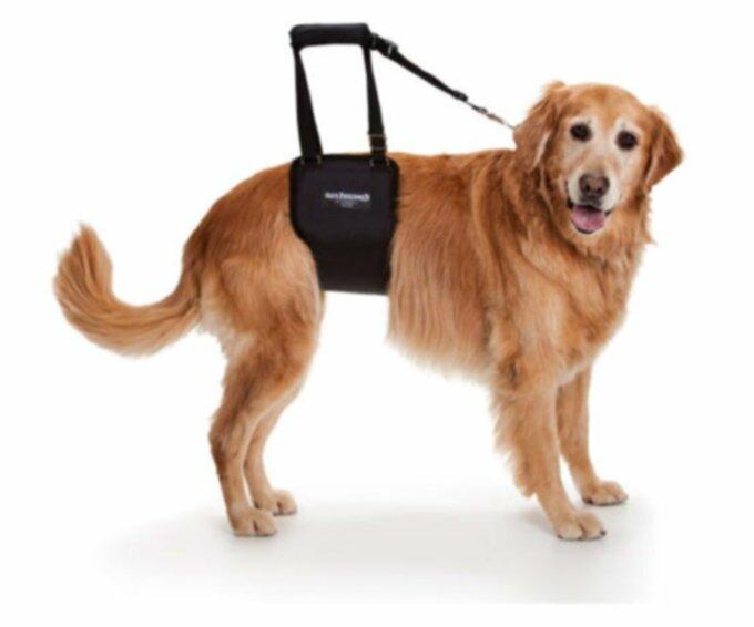 Лечение артрита у собак?