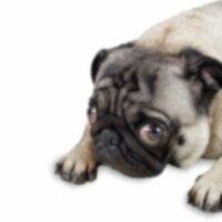 Очистители мочи и пятен для собак