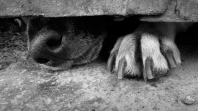 Собачьи ногти на ногах кровоточат?