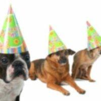 Вечеринка с собачьим сюрпризом