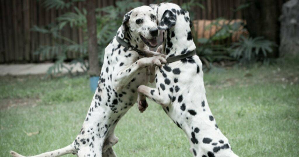 Дрессировка глухой собаки?