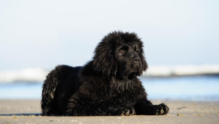 5 пород собак с перепончатыми лапами и почему они есть!