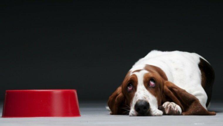 Всемирный день артрита: 10 продуктов и добавок, которые могут помочь собакам при артрите