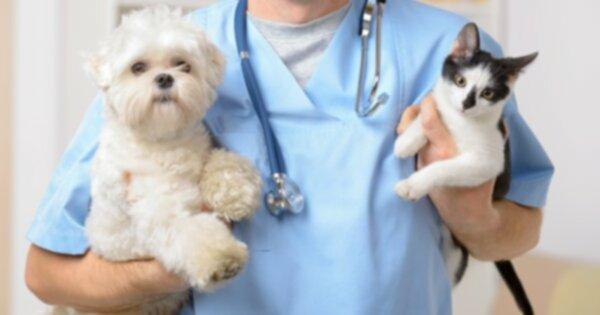 6 способов сэкономить на счетах ветеринара