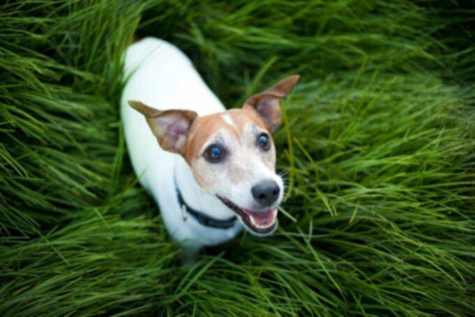 Рак у собак: рак пищевода