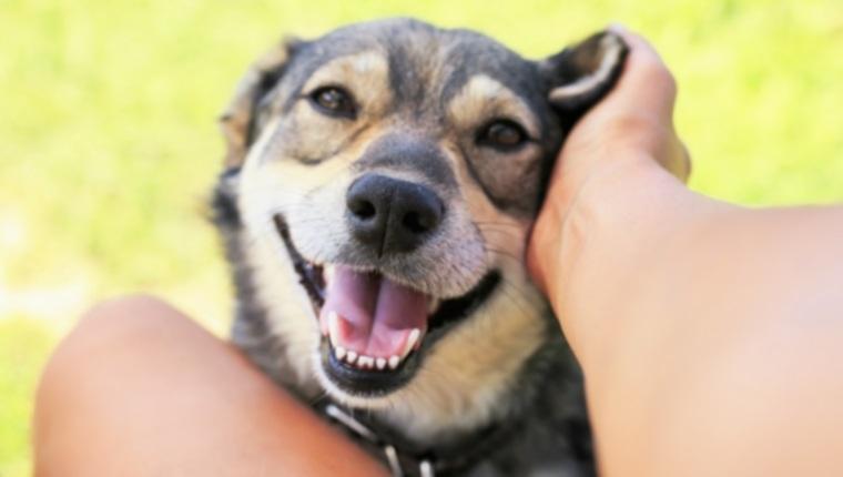 Собаки и болезни десен: все, что вам нужно знать