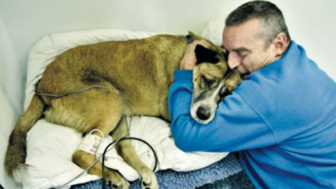 Рак у собак: хондросаркома носа