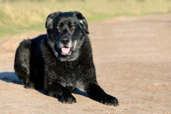 Рак у собак: опухоли носа