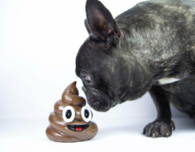 Собачья диарея: следует ли мне волноваться?