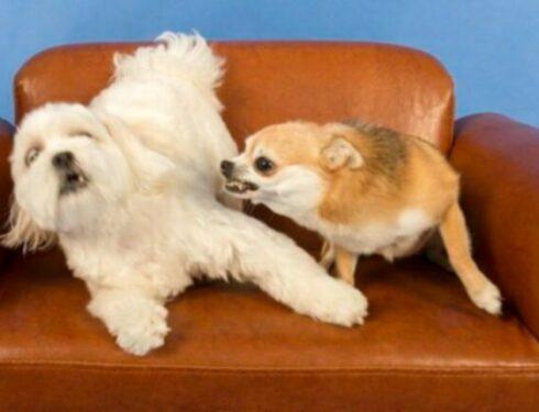 Собачье рычание: что это значит и что делать
