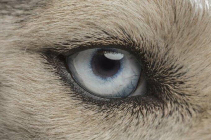 Собаки дальтонизм?