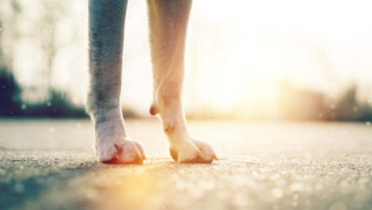 Горячий тротуар: ущерб, который он может нанести лапам вашей собаки, и как этого избежать