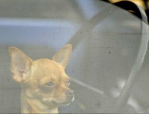 Могу ли я оставить собаку в машине, если я собираюсь пробыть всего несколько минут?