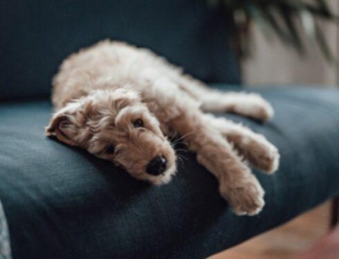 Железодефицитная анемия у собак: симптомы, причины и методы лечения