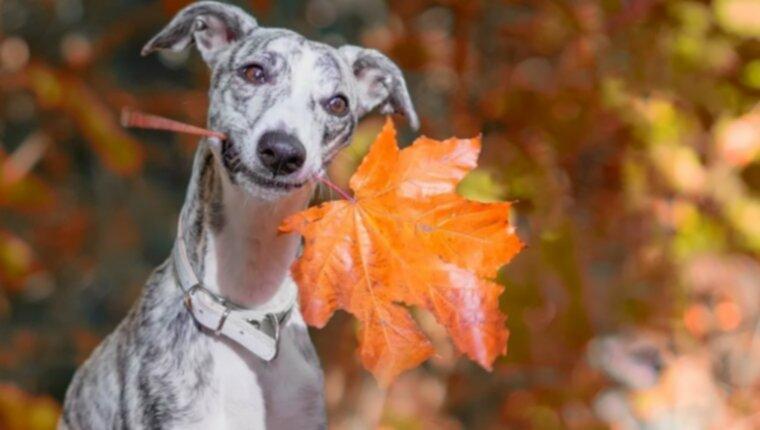7 забавных вещей, которые можно сделать с собакой этой осенью