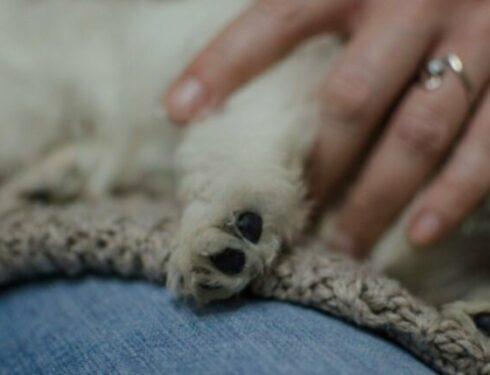 15-летний пес Спарки вернулся домой после 331 дня отсутствия благодаря сообщению в Facebook