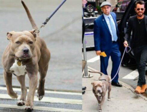 Pop Pets: очаровательный, усыновленный питбуль Джастина Теру теперь официально в Instagram