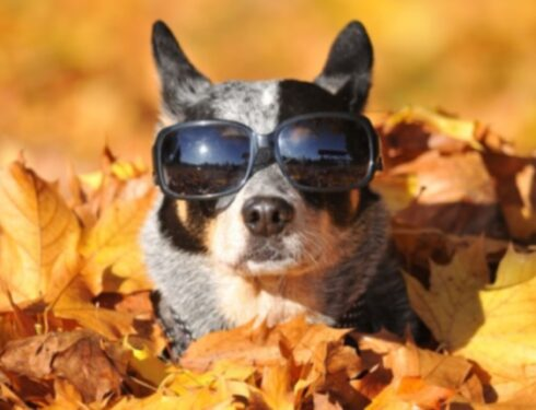 Мех смеется: 10 собак готовы прыгнуть в осенний сезон [ВИДЕО]