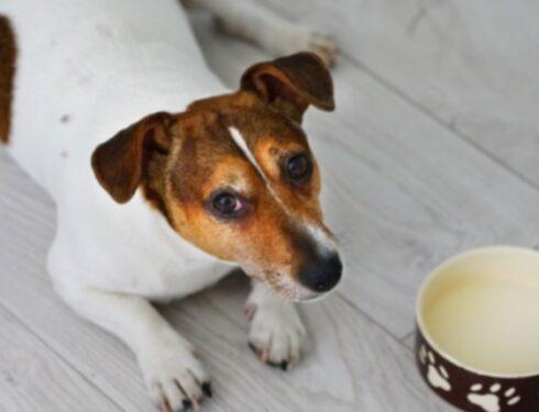 Мама собаки: Моя собака страдала пищевой аллергией, а я даже не знала об этом! Вот что я сделал