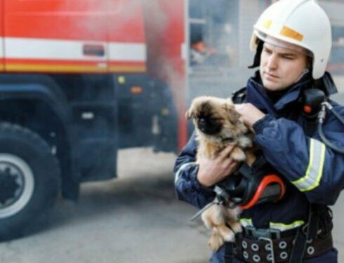 Пожарные, полиция и службы животных спасают всех 26 собак из горящего приюта в Орландо