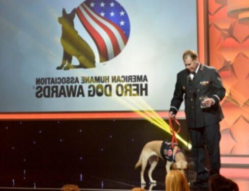 Познакомьтесь с 7 собаками, которые будут удостоены награды American Humane Hero Dog Awards 2021 года