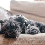 Нерегенеративная анемия у собак: симптомы, причины и методы лечения