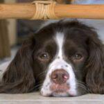 Регенеративная анемия у собак: симптомы, причины и методы лечения
