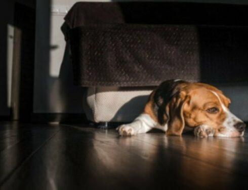 Метаболическая анемия у собак: симптомы, причины и методы лечения