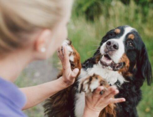 6 способов установить связь с собакой на более глубоком уровне